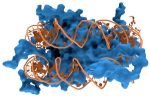 Nucleosome1