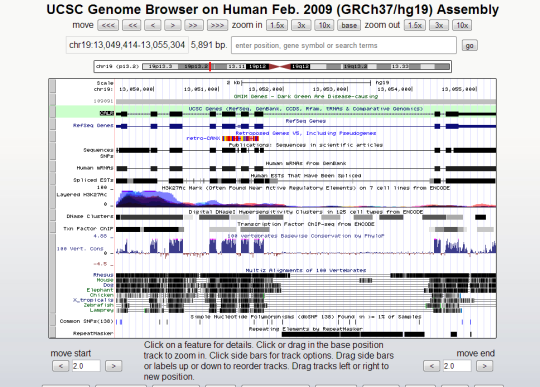 CALR gene on chrome 19