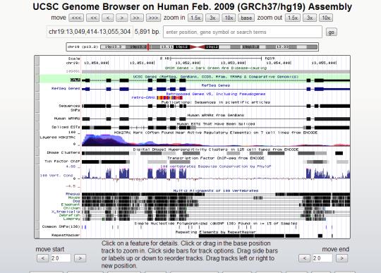 CALR gene on chrome 19