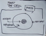 meet the cell