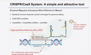 CRISPR Cas9 SLIDE