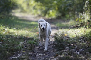 Jenny solo trail 2