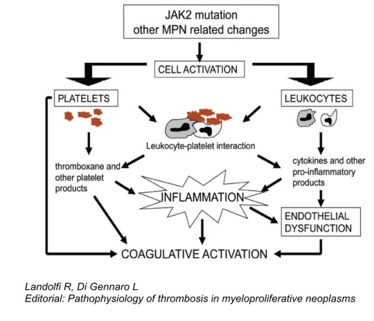 CRT-Inflammation 2