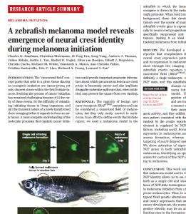 Science zebrafish